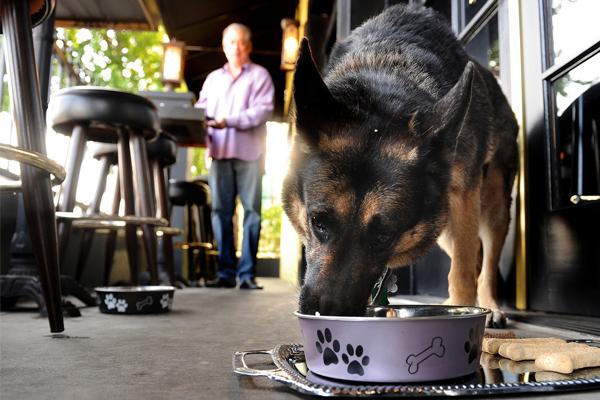 cane che mangia fuori