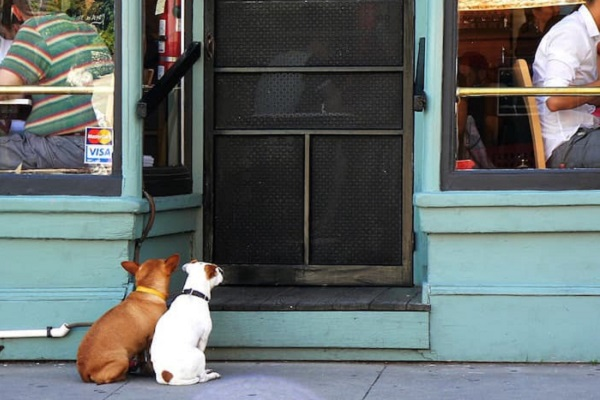cani fuori dal ristorante