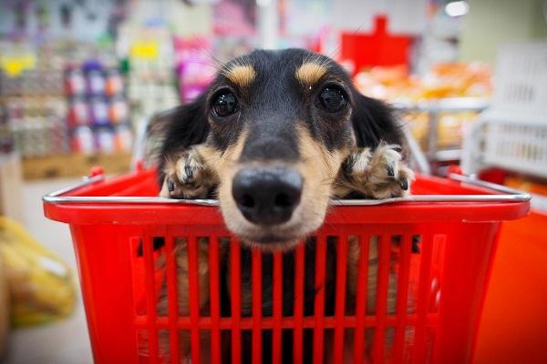 cane dentro a carrello