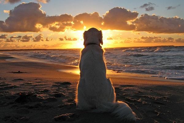 cane di spalle al tramonto