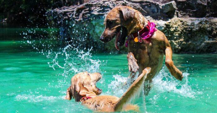 cani che giocano in acqua