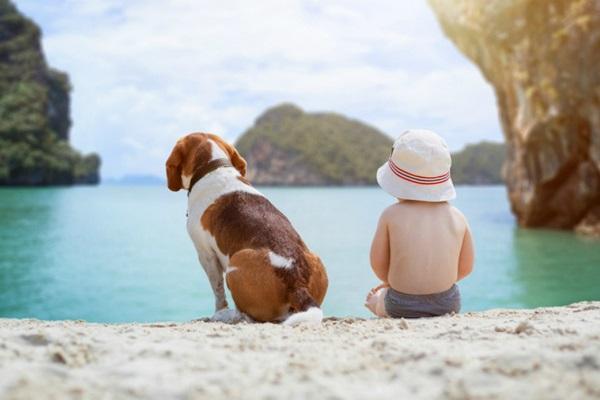 cane e bimbo a mare