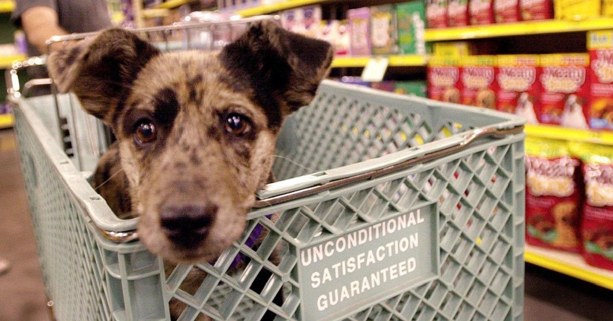 cane al supermercato