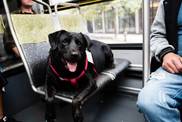 cane sul bus