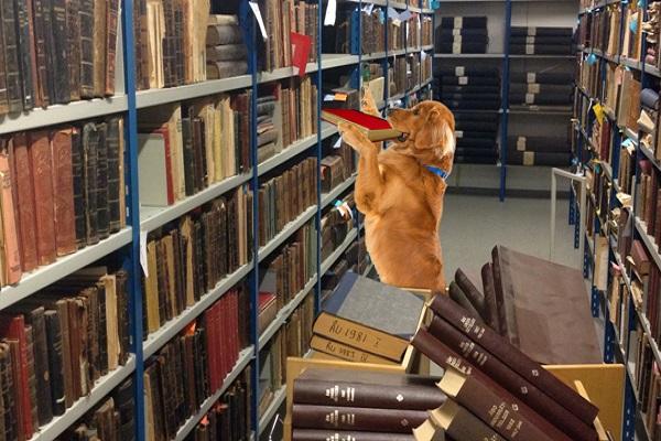cane cataloga libri
