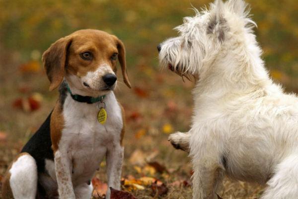 cani che si arrabbiano