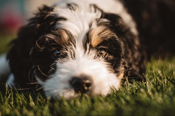 5 malattie legate alla nutrizione del cane (e come evitarle)