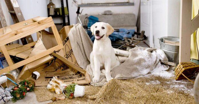 cucciolo distrugge la casa