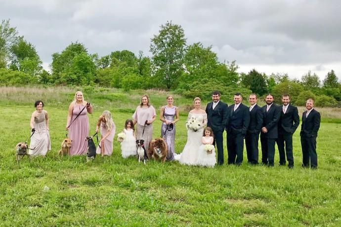 matrimonio-cani