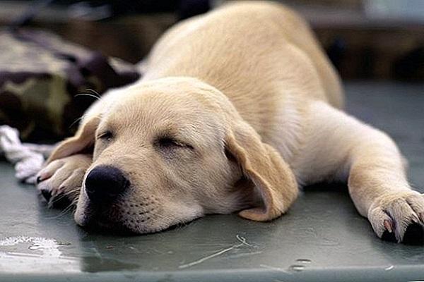 Cani e musica: riescono ad ascoltarla? Qual è la preferita?