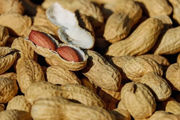 Cani e arachidi: possono mangiarle? E quante?