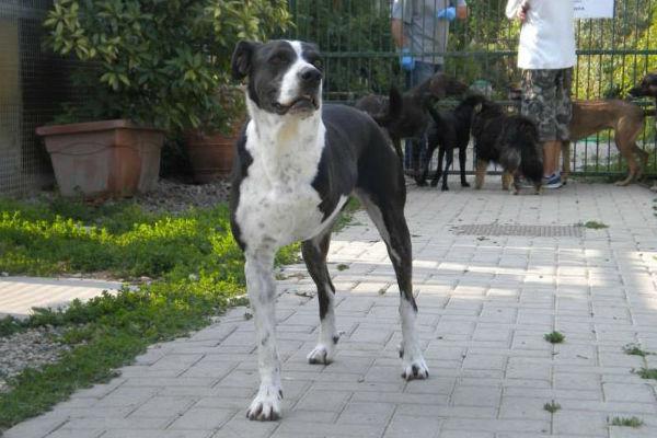 cane con tre zampe