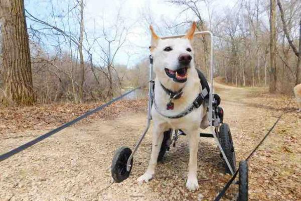 cane col carrello