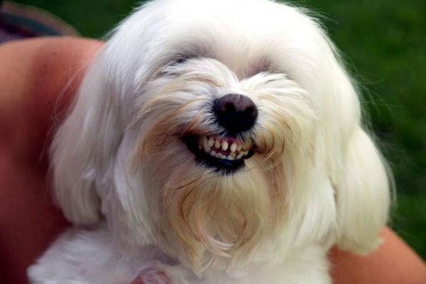 pelo bianco del cane