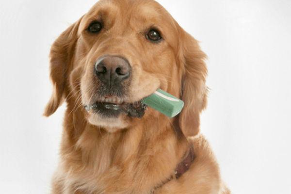 cane con oggetto in bocca