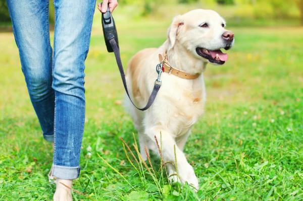 Insegnare al cane a chiedere di uscire: ecco come