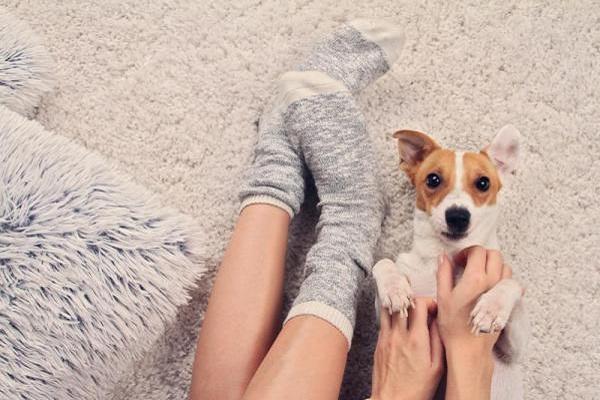 cane e calzini
