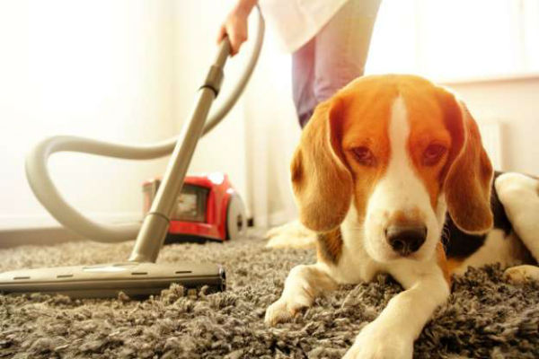 cane e aspirapolvere