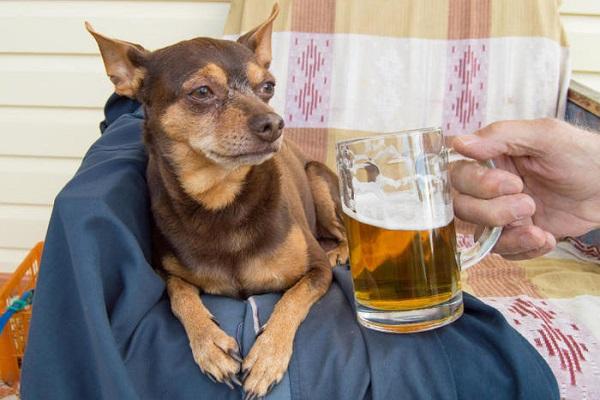cane guarda birra