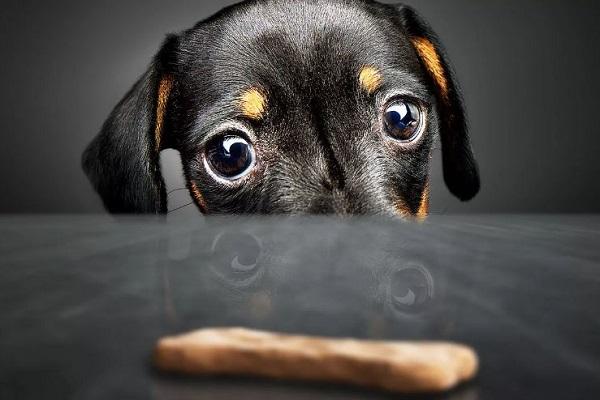 cane guarda snack per cani