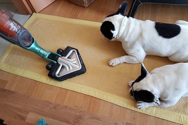 cani hanno paura di aspirapolvere