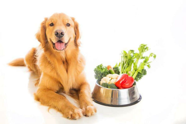 cane con ciotola di verdure