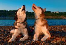 cani in riva al mare
