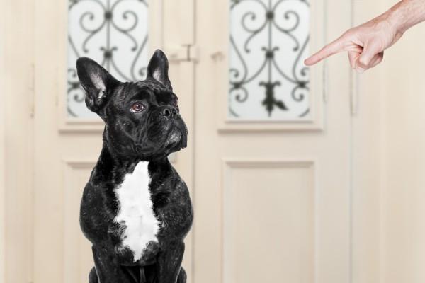 Perché il cane non obbedisce?
