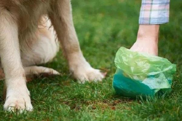 sacchetto per cacca cane