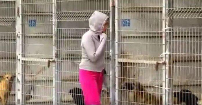 rifugio-cani-comprato-da-donna-salvarli-tutti