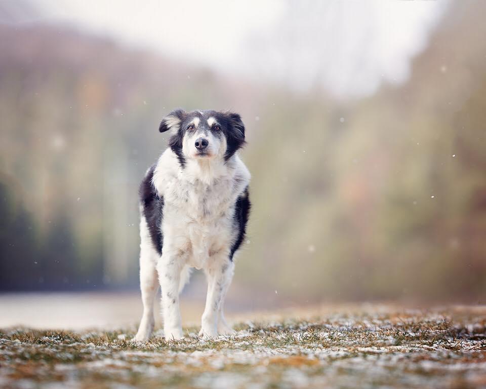 Rifugio per cani comprato da una donna che voleva salvarli tutti
