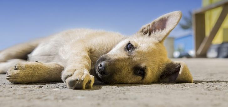 sensibilizzazione-cani
