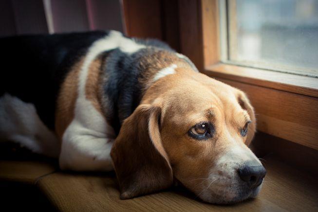 Cane abbandonato e sostituito per andare in vacanza