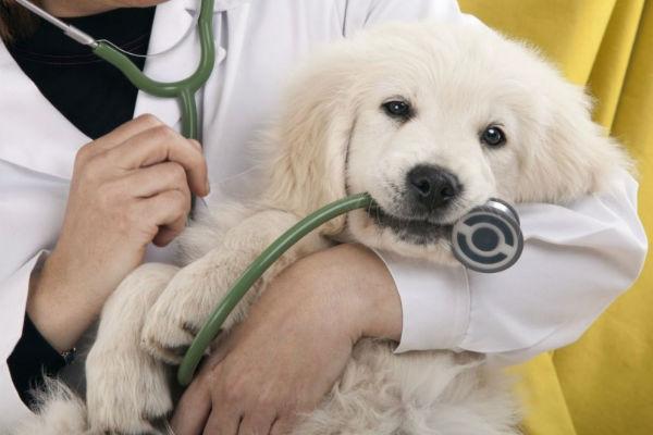 Tumori ovarici nei cani: quali sono, cosa fare
