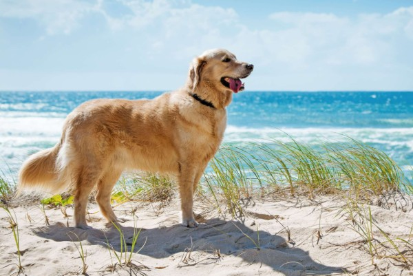 un cane sulla sabbia