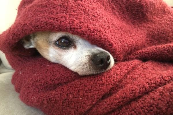 un cucciolo avvolto in un plaid