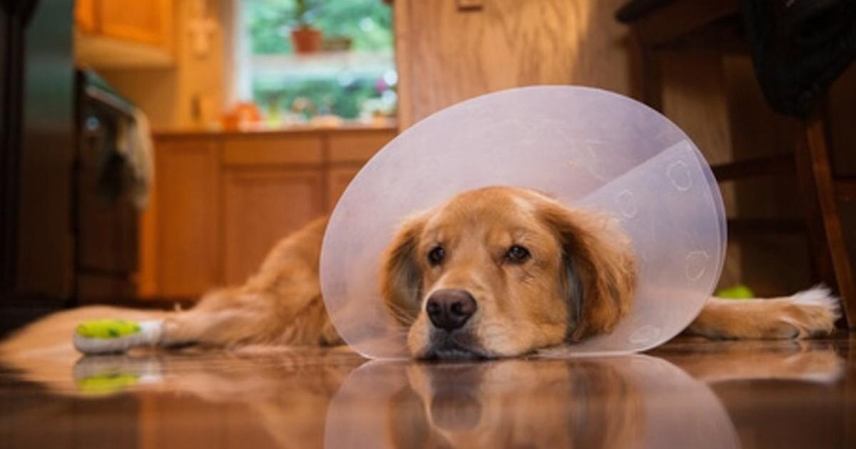 un cane sdraiato con il collare elisabettiano