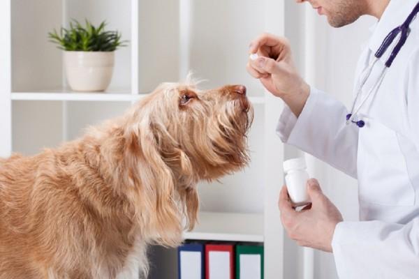 un cane riceve la medicina dal veterinario