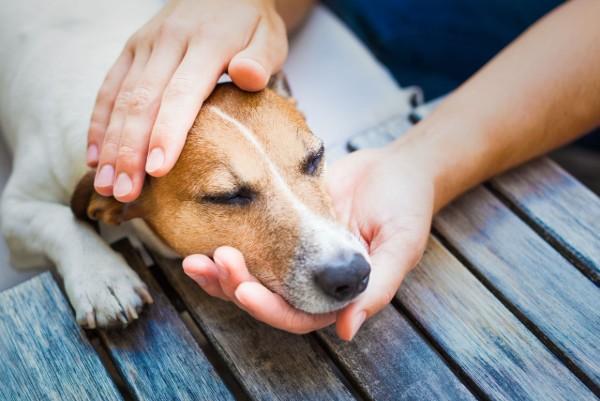 Meningioma del cane: cos'è, cosa sapere e cosa fare