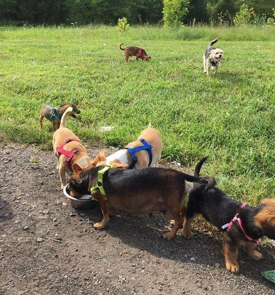viaggio-cani
