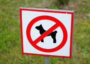 zungri-ordinanza-vieta-la-presenza-di-cani-in-piazze-e-ville