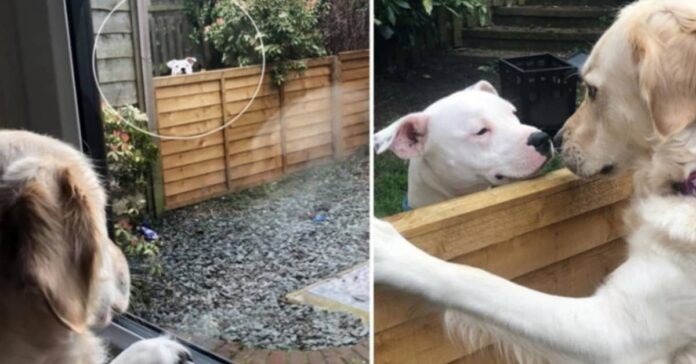 Amicizia tra due cani