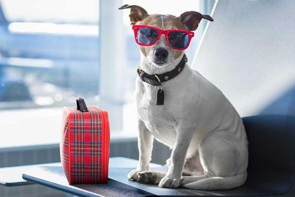 cane con la valigia