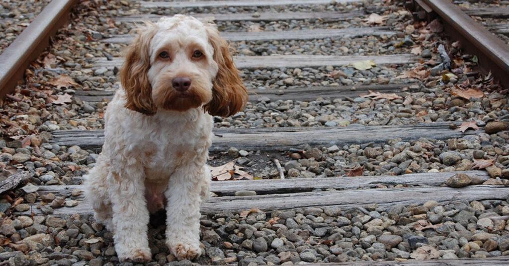 Urbino, troppo cani maltrattati: arriva la denuncia dei volontari del canile
