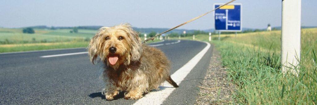 Cane abbandonato per la strada