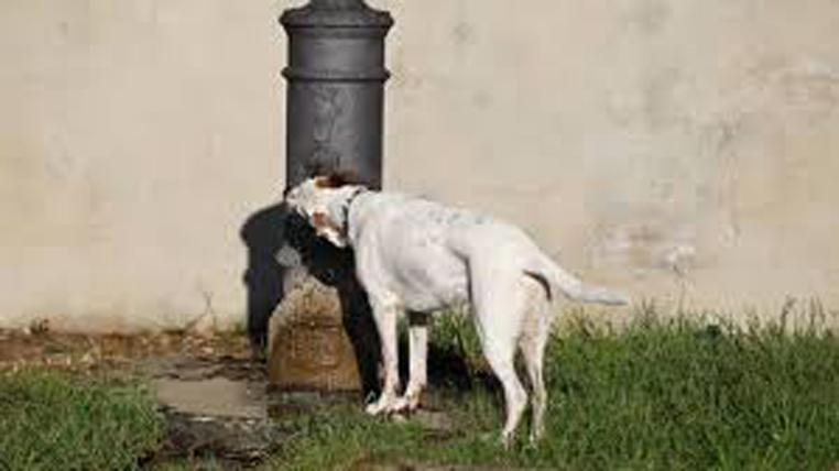 Cane beve da una fontanella pubblica
