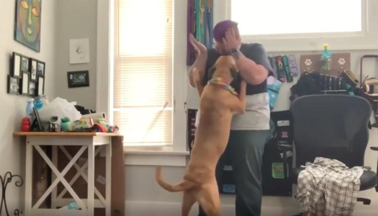 Luna, il cane educato per aiutare la proprietaria a combattere gli attacchi di panico