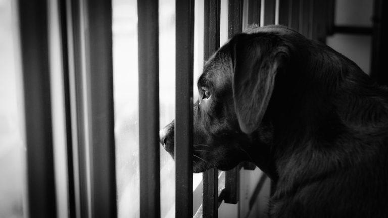Cane che aspetta