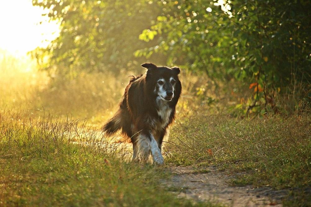 Cane che cammina in un sentiero