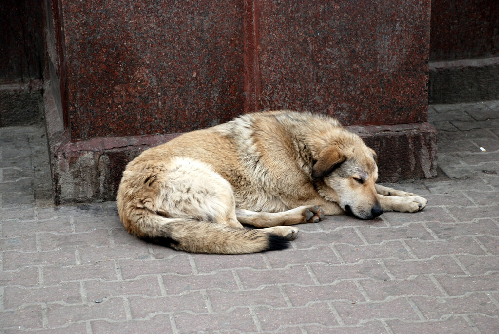 La Spezia: cane travolto da auto in fuga, i soccorsi non arrivano in tempo